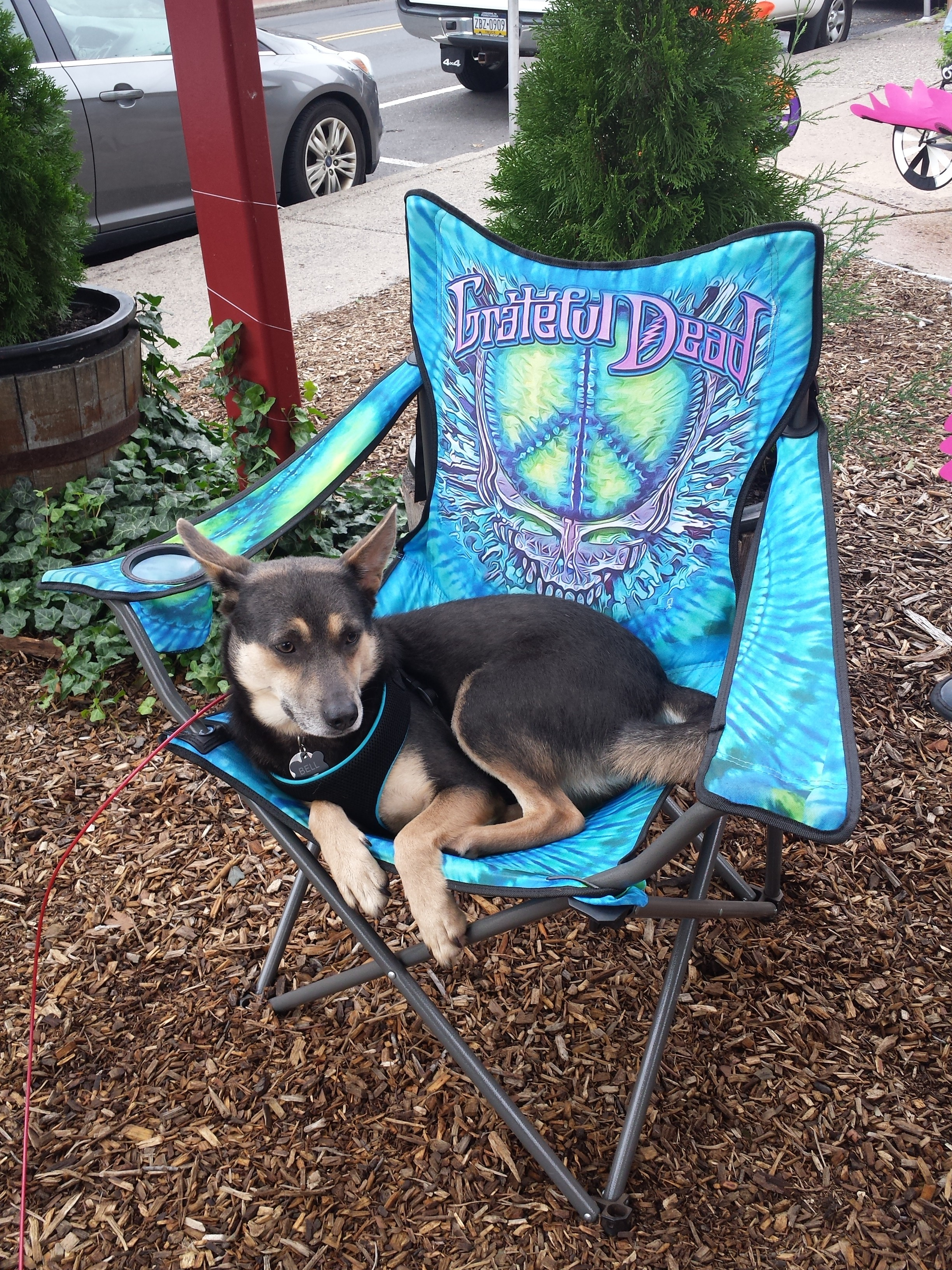 Tie Dye Camping Chair. This chair is OFFICIALLY LICENSED BY THE GRATEFUL DEAD