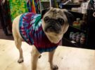Philly Pug & Short Nose Rescue Tie Dye Party!!