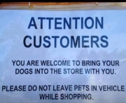 dogs welcome!
